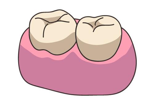 健康な歯 イラスト
